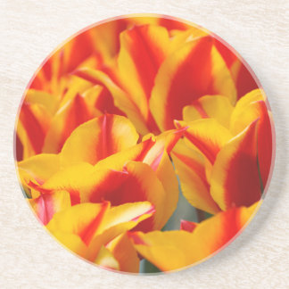 Red and Yellow Tulips Drink Coasters