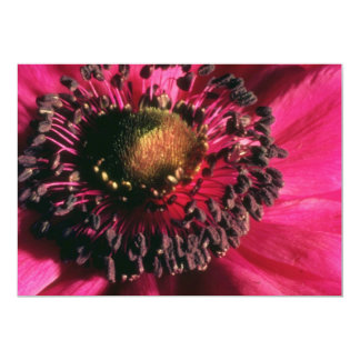 Red Anemone flowers Card
