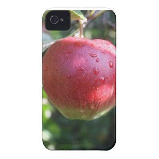 Red Apple Blackberry Bold Case