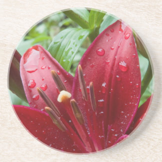 Red Asiatic Lily With Buds Beverage Coaster