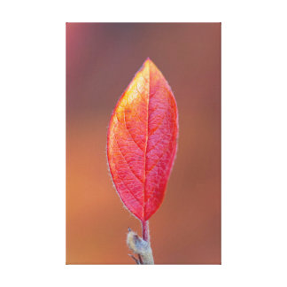Red autumn leaf stretched canvas prints