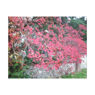 Red Autumn Tree Photo Canvas Print