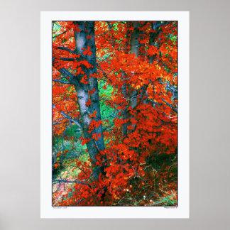 Red Autumn -Utah Posters