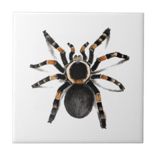 Red Banded Tarantula Spider Tile