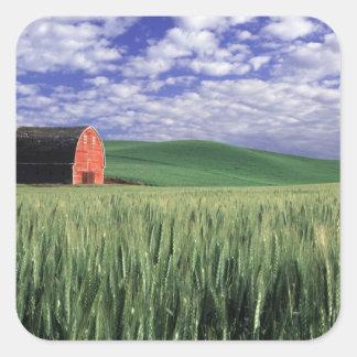 Red barn in wheat & barley field in Whitman Square Sticker
