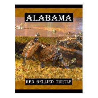 Red Bellied Turtle (Alabama) Postcard