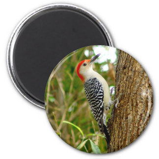 Red bellied Woodpecker Bird Magnet