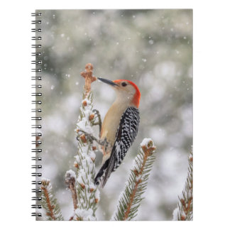 Red-bellied Woodpecker in the snow Notebooks