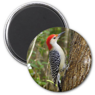 Red Bellied Woodpecker Magnet