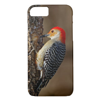 Red-bellied Woodpecker on a Tree iPhone 8/7 Case