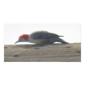 Red Bellied Woodpecker Personalised Photo Card