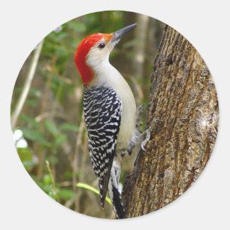 Red Bellied Woodpecker Sticker