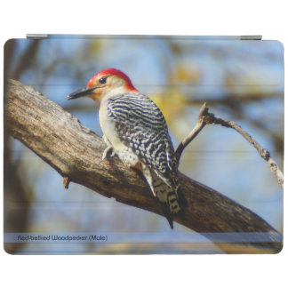 Red-Belllied Woodpecker iPad Smart Cover iPad Cover