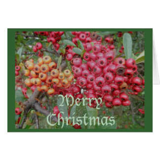 Red Berries Christmas Card