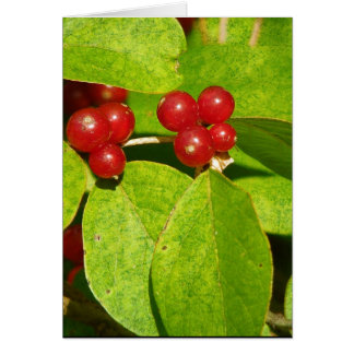 Red Berries Greeting Card