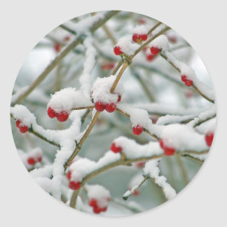 Red Berries in the Snow Classic Round Sticker
