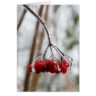 Red Berries in Winter Greeting Card