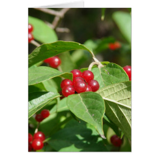 Red Berries Merry Christmas Greeting Card