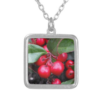 Red berries on a teaberry bush Gaultheria procumbe Silver Plated Necklace