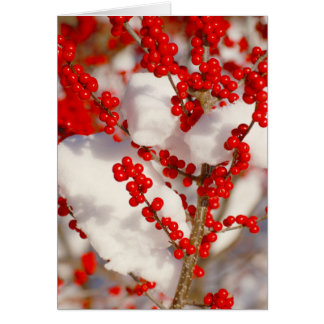 Red Berries Photo Christmas Greeting Cards