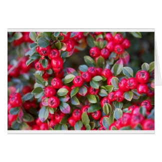 Red Berry photograph Christmas Red Berry Card