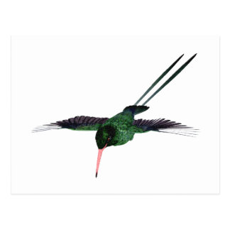Red Billed Streamertail Hummingbird Postcard