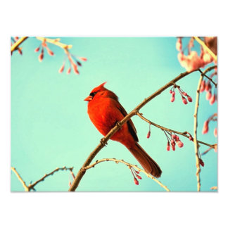 Red Bird & Cherry Blooms Photographic Print