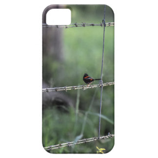 RED & BLACK WREN AUSTRALIA ART EFFECTS BARELY THERE iPhone 5 CASE