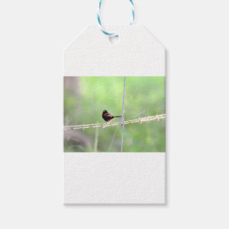 RED & BLACK WREN QUEENSLAND AUSTRALIA GIFT TAGS