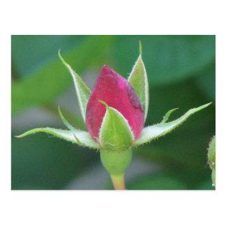 Red Bloom Postcard