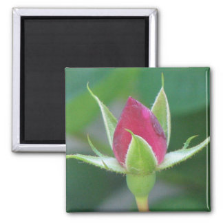 Red Bloom Square Magnet
