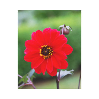 Red Blooms Canvas Print
