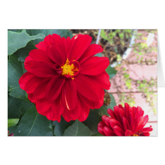 Red Blooms Card