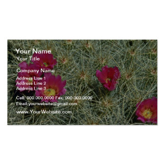 Red Blooms On Cactus flowers Business Card Template