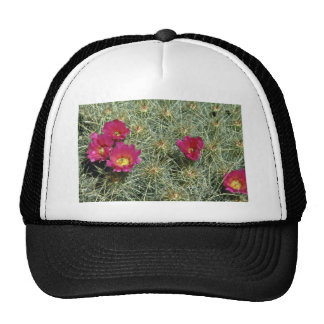 Red Blooms On Cactus flowers Hat