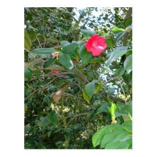 Red Blooms Postcard
