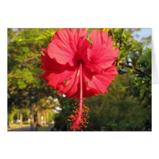 Red Blossom Note / Greeting Card