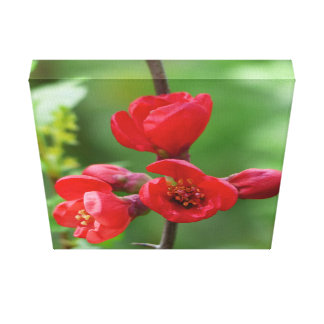 Red blossoms in spring canvas print