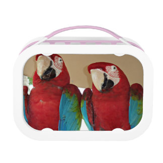 Red, Blue, Green Macaws (Parrots) Lunch Box