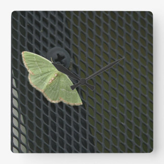 Red Bordered Emerald Moth square clock. Square Wall Clock