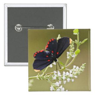 Red-bordered Pixie on white brush 15 Cm Square Badge
