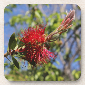 Red Bottlebrush Flower Coasters