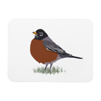 Red Breasted American Robin Digitally Drawn Bird Magnet