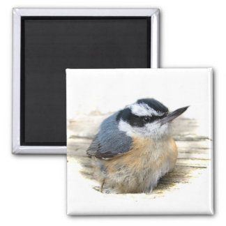 Red-breasted Nuthatch Square Magnet