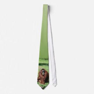 Red-Brown Haired Orangutan Sitting On Grass Tie