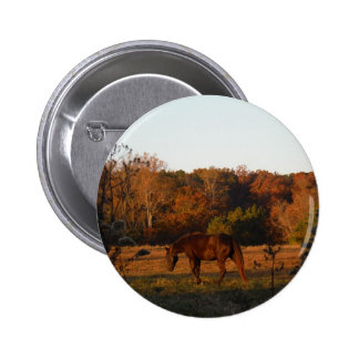 Red Brown horse autumn woods Pins