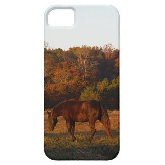 Red  Brown horse, autumn woods. iPhone 5 Cases