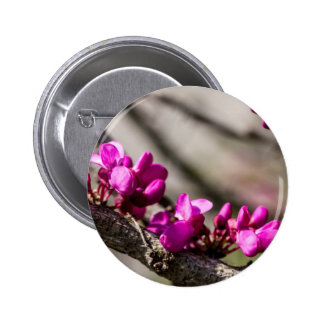 Red Bud Blooming Pinback Buttons