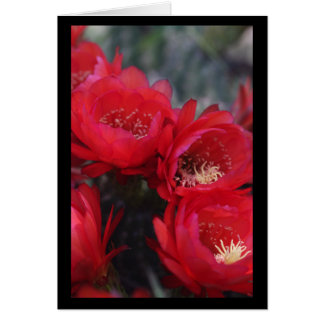 Red cactus bloom greeting card