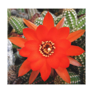 Red cactus blossom gallery wrapped canvas